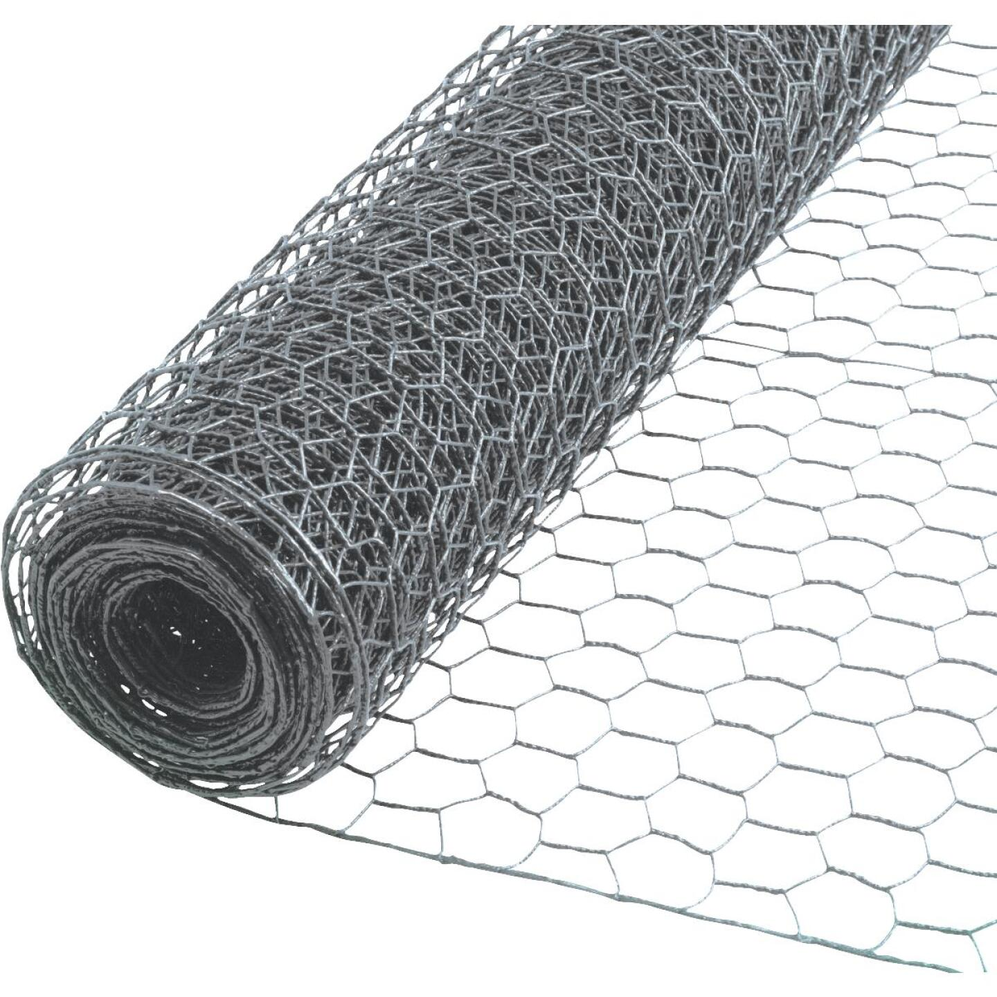 1/2 In. x 36 In. H. x 10 Ft. L. Hexagonal Wire Poultry Netting Image 1