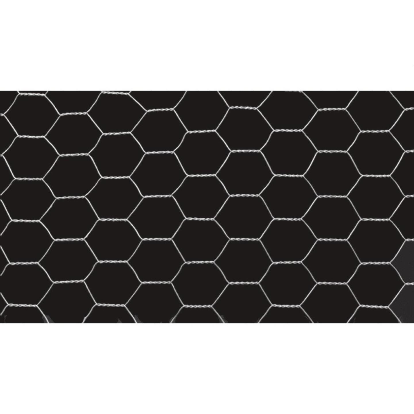 1/2 In. x 36 In. H. x 25 Ft. L. Hexagonal Wire Poultry Netting Image 2
